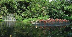 pfl-singapore2007_01