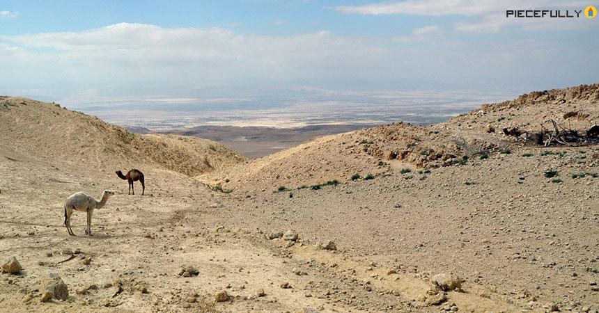 pfl-jordan-2009_01